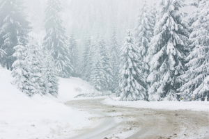 A road surrounded by trees and covered in snow