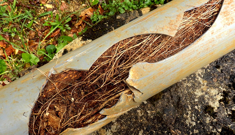 Closeup of a cracked drainage pipe filled with tree roots